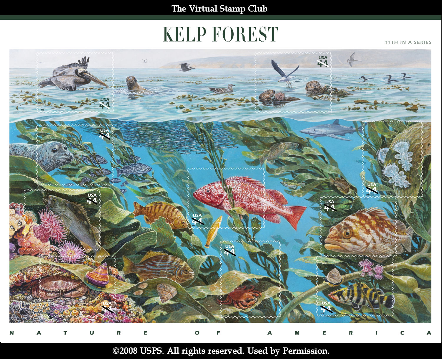 Nature of America: Kelp Forest (2009)